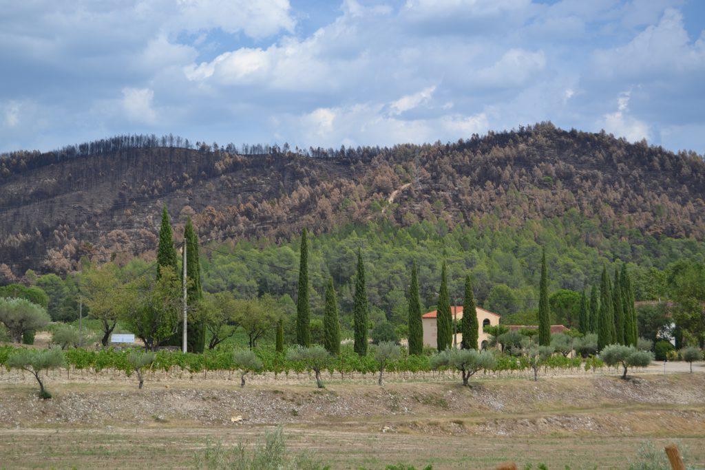 De mange brændte og svedne træer set fra Domaine des Aspras