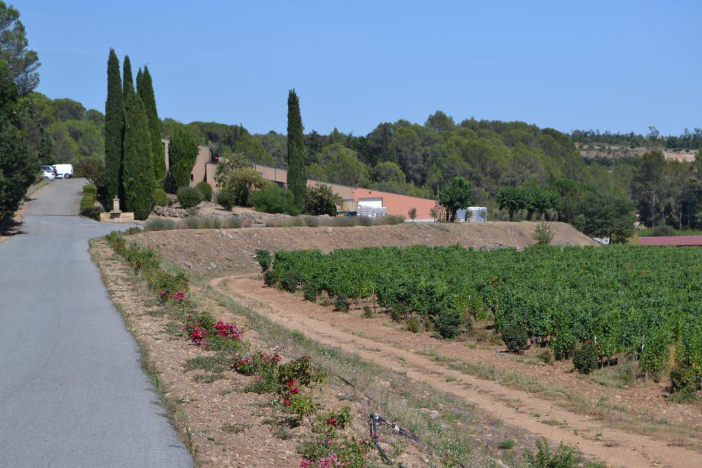 Chateau Roubine med vinmark i forgrunden