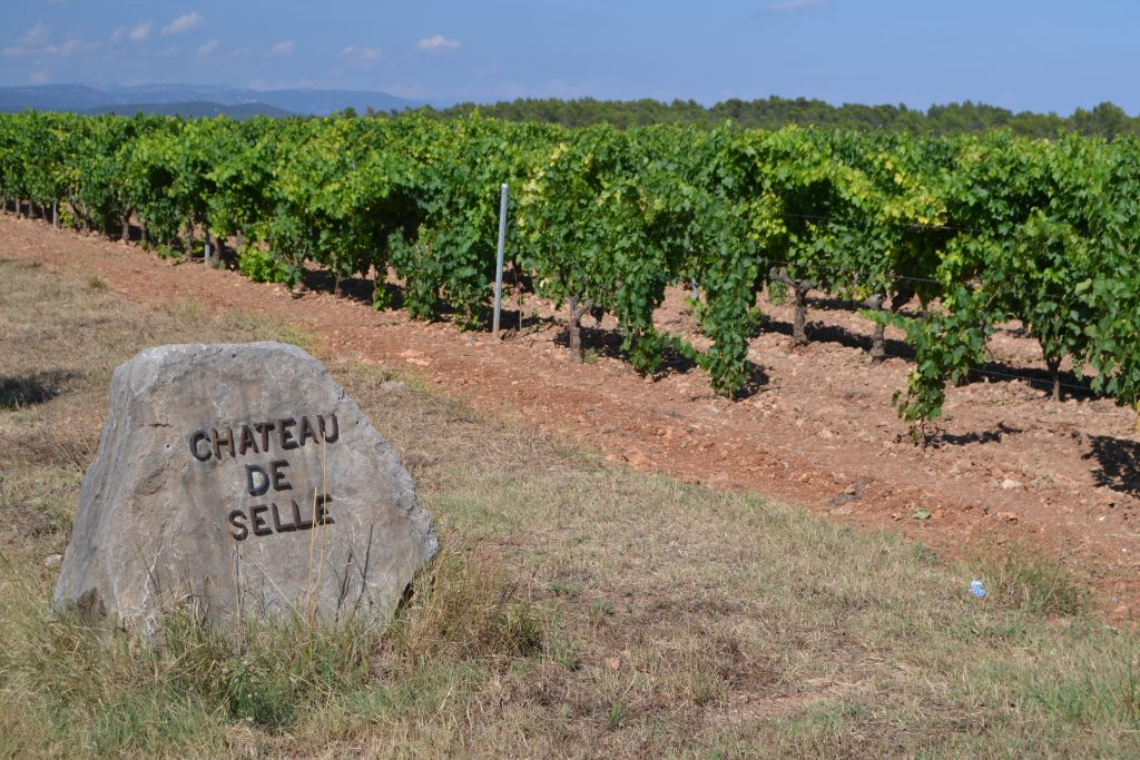 Vinmark ved Chateau de Selle