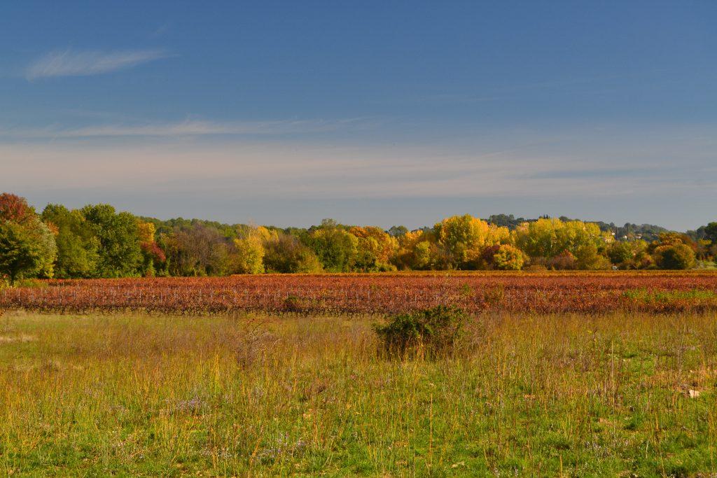 Smukke efterårsnuancer