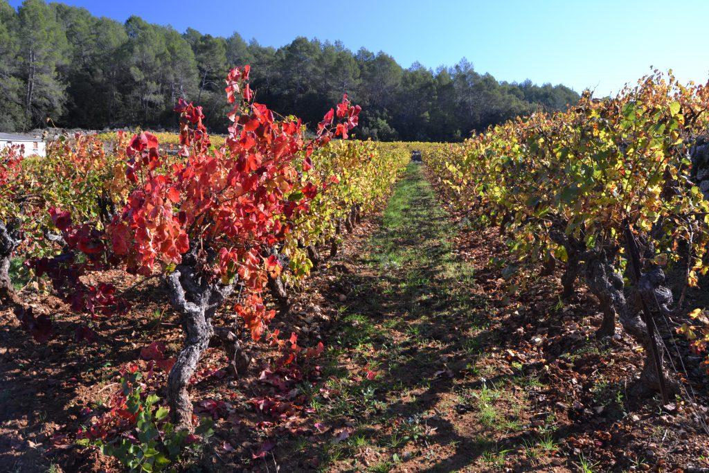 Tydeligt at vinmarkerne har ændret farver